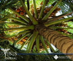 Cocos Nucifera: Its Properties and Contributions to Dentistry